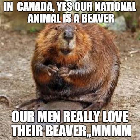 Beaver Meme - image tagged in beaver imgflip