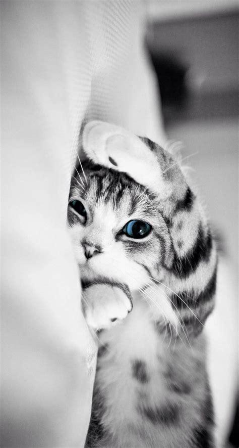 cute cat iphone wallpaper   iphone wallpaper