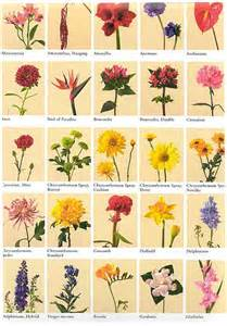 Flower meanings list of flowers and their meanings