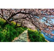 Description The Wallpaper Above Is Spring Blossom In
