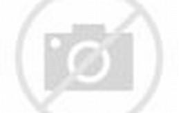 Cute Kitten Cat Sleeping