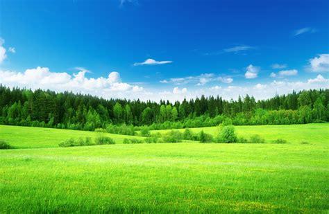 nature  field grass green light green forest tree sky