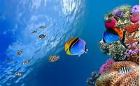 Underwater Coral Fish Wallpapers Pictures Photos Images