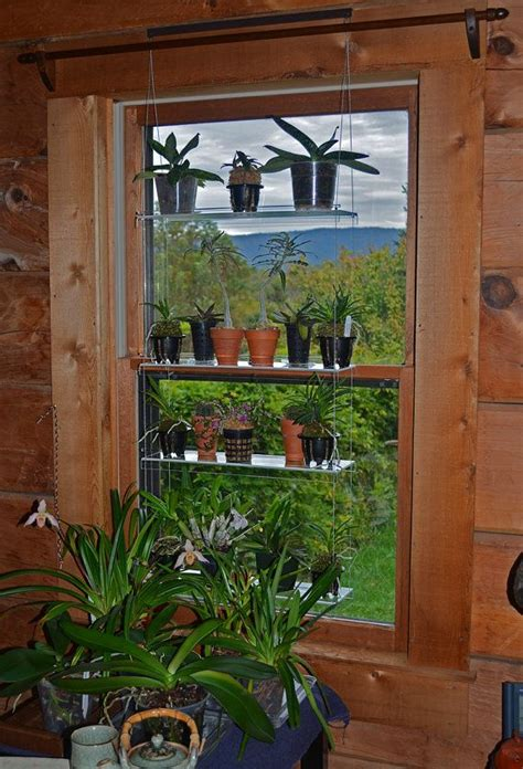 Best Window For Plants Best 25 Window Plants Ideas On Apartment