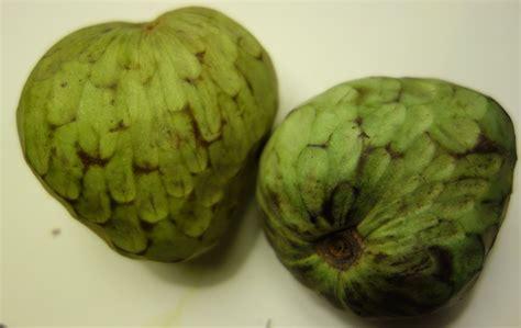 fruit l anone anone ch 233 rimole ma botanique