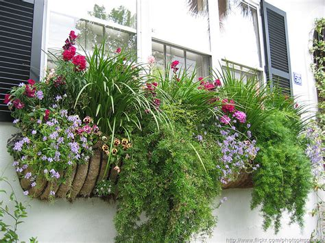 Best House Plants For Window Window Boxes