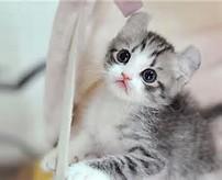 Foto Kucing Lucu | Gambar Kucing Imut, Manis | Koleksi Gambar Unikku