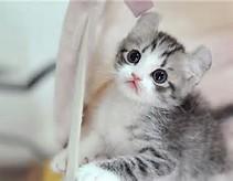 Foto Kucing Lucu Banget Gambar Kucing Lucu