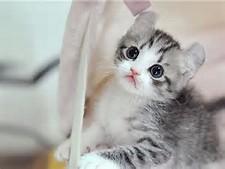 Foto Kucing Lucu   Gambar Kucing Imut, Manis   Koleksi Gambar Unikku