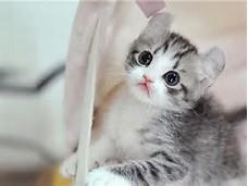 Foto-foto kucing lucu | Kucing gue