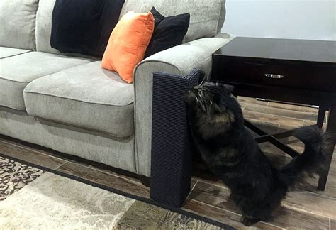 leather couch protector from cats cat scratching sofa 28 images cat scratch furniture