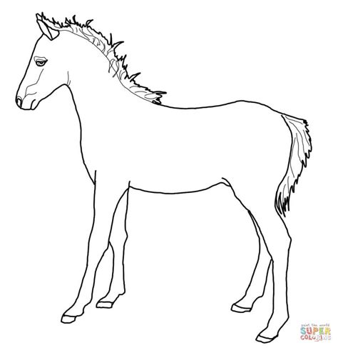 shetland pony coloring pages welsh pony coloring page free printable coloring pages