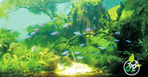 aquascape tanpa pasir aquascape tanpa co2 injection simple aquascape