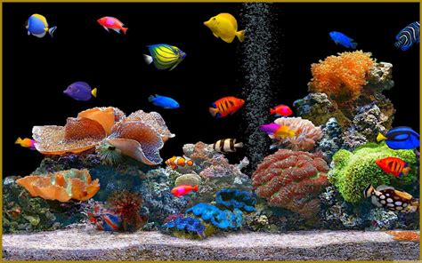 wallpaper colorful fish and interactive water aquariums images aquarium wallpaper hd wallpaper and