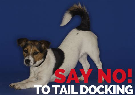why are dogs tails docked necessity or why are s tails docked