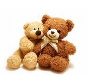 Teddy Bear  Best Animals