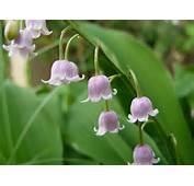 Beautiful Flower Wallpapers For Desktop 1777 Hd