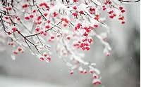 Winter Flowers  Wallpaper High Definition Quality Widescreen