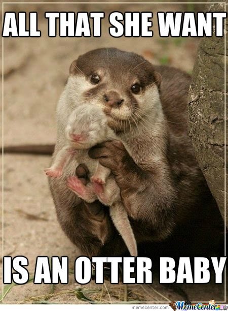 Otter Meme - ace of otters by josef sg2000 meme center