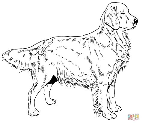 golden retriever dog house golden retriever puppy coloring pages printable coloring