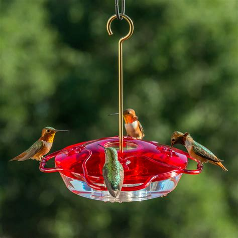 little flyer 4 hummingbird feeder lf 4 droll yankees