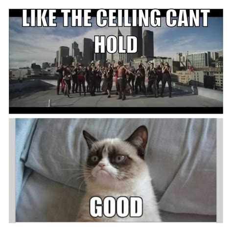 Up Like The Ceiling Can T Hold Us by 260 Best Images About Oh Grumpy Cat On Grumpy