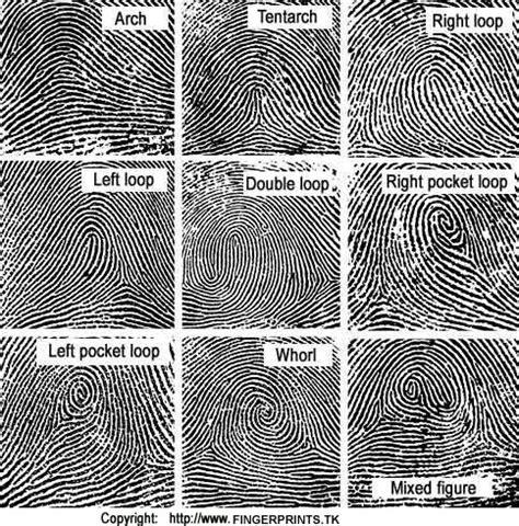 print pattern types revealing fingerprints diane capri licensed to thrill