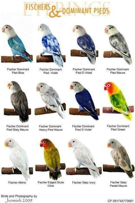 world types of colorful birds mutation of the