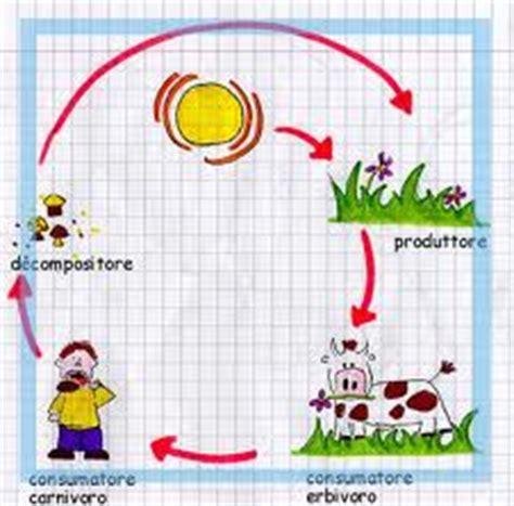 la catena alimentare scuola primaria 4 176 circolo didattico barcellona p g ottobre 2010