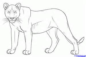 How to draw a real lion draw lions step 10