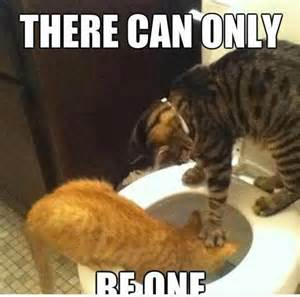cat memes of all time funny memes cat also have 25 funny cat memes