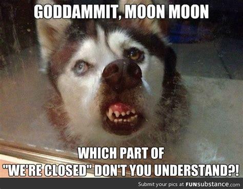 goddammit moon moon moon moon pinterest fun