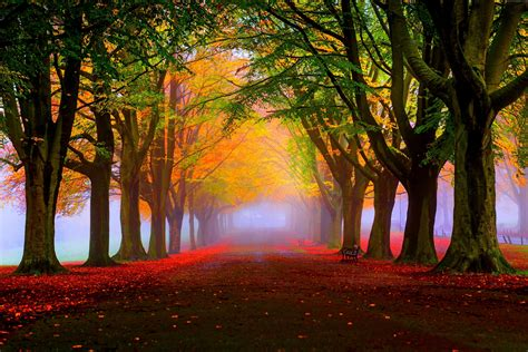 wallpaper 4k autumn wallpaper park 5k 4k wallpaper 8k autumn beautiful