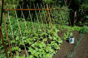 Pole Beans Trellis Trellises And Cages