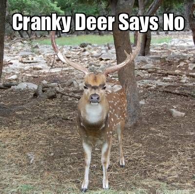 Funny Deer Hunting Memes - 25 funny hunting fishing pictures that will make you go