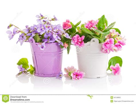 wallpaper flower bucket flowers in bucket with green leaves stock photo image