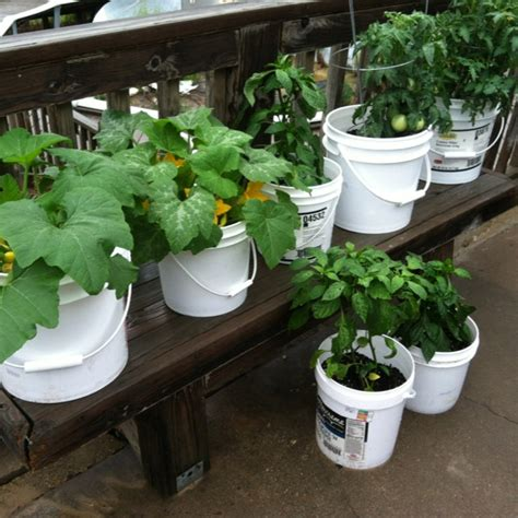 1000 Images About My Gardening This Year On Pinterest 5 Gallon Vegetable Garden