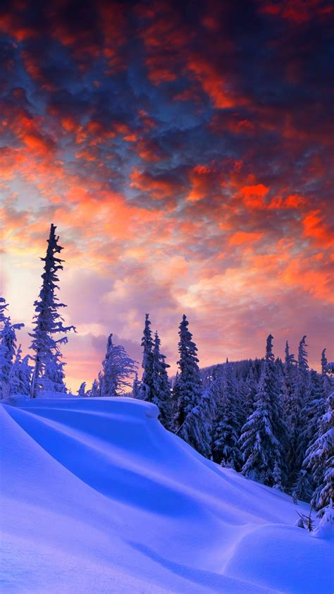 wallpaper forest snow winter sunrise clouds