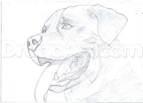 rottweiler coloring book free coloring pages of rottweiler puppy