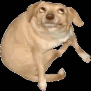 6o163 s dog know your meme