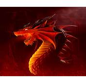 Dragons Images Dragon Wallpaper HD And Background Photos