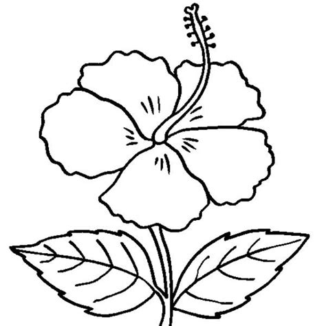 hibiscus flower coloring pages jpg 600 215 600 flowers