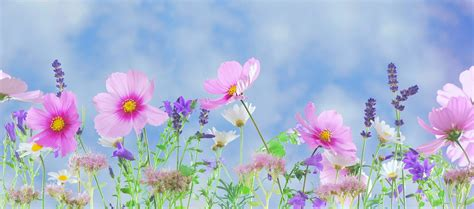 flower garden word ebb tide article a garden of flowers the of the