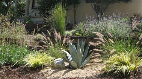 drought tolerant plants desert landscape ideas yelp