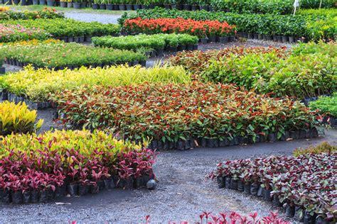 garden nurseries near me garden centres near me