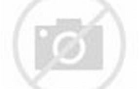 Persian Angora Cat