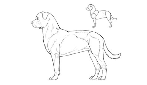 how to cut rottweiler how to draw a details make the difference