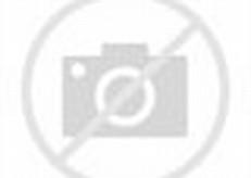 Rainforest Animals Leopard