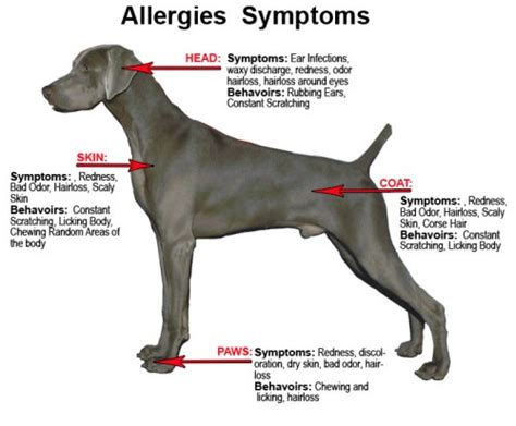 allergy free dogs food allergies the bully breeds