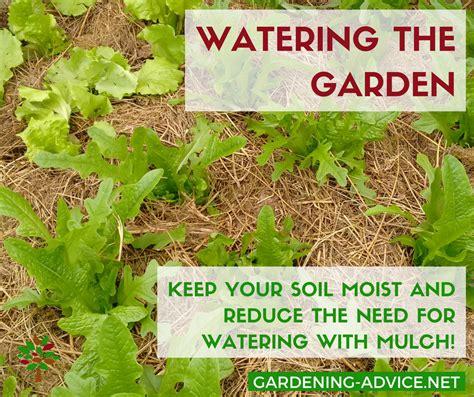 5 tips tricks for watering the vegetable garden